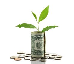 Image of Money and Plant